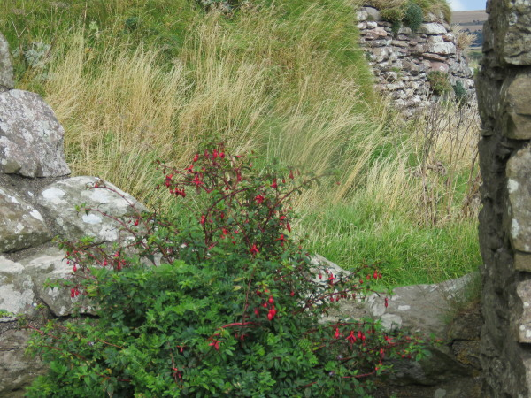 """Dunnottar Castle flowers"""