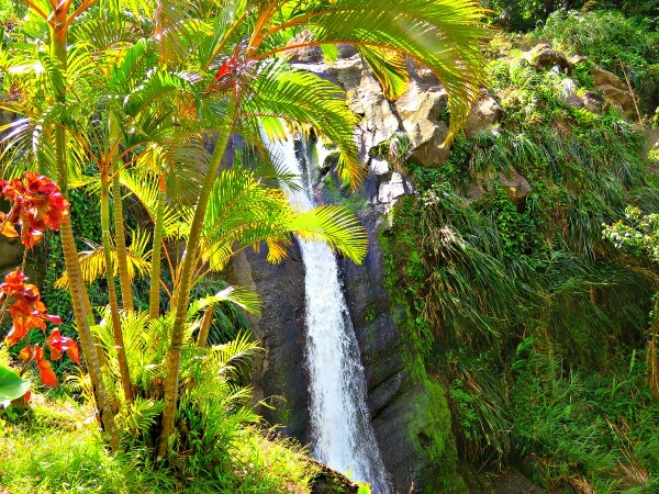 Grenada Waterfall and Spice Tour