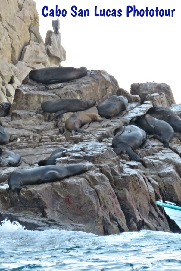 Sea lion colony napping in Cabo San Lucas, Mexico  #travel #Mexico #Cabo #CaboSanLucas #SeaLion #nature #cruise